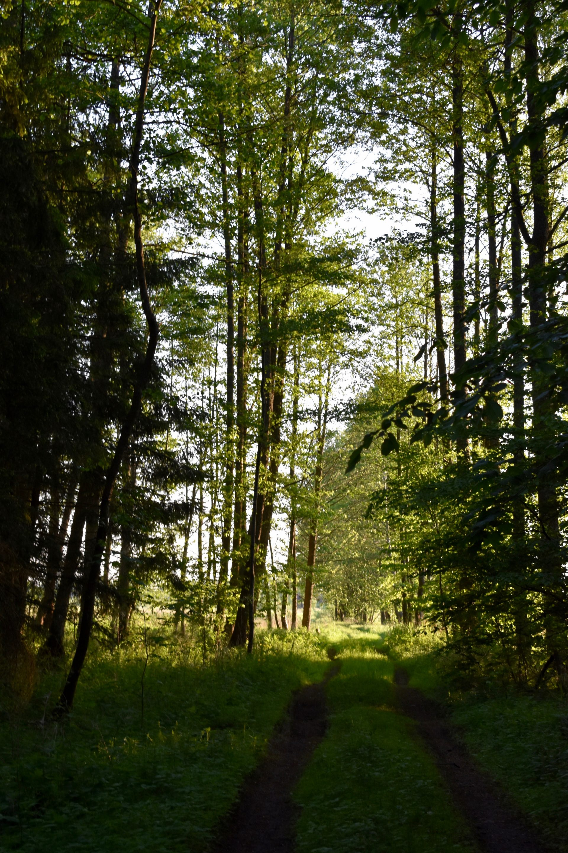 Sunlight in the green forest