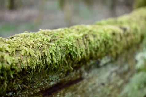 Moss. Sussex, England.