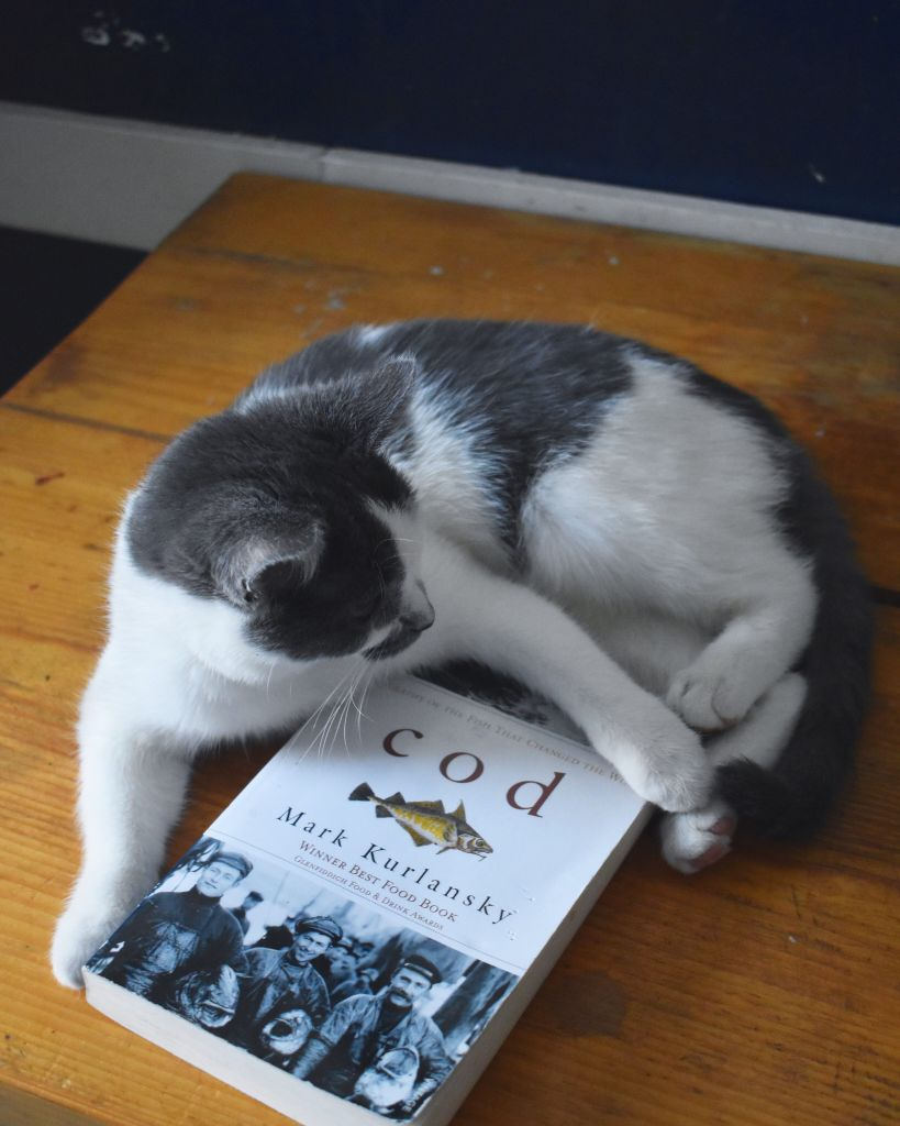 Grey and white fluffy cat laying on a table with a book