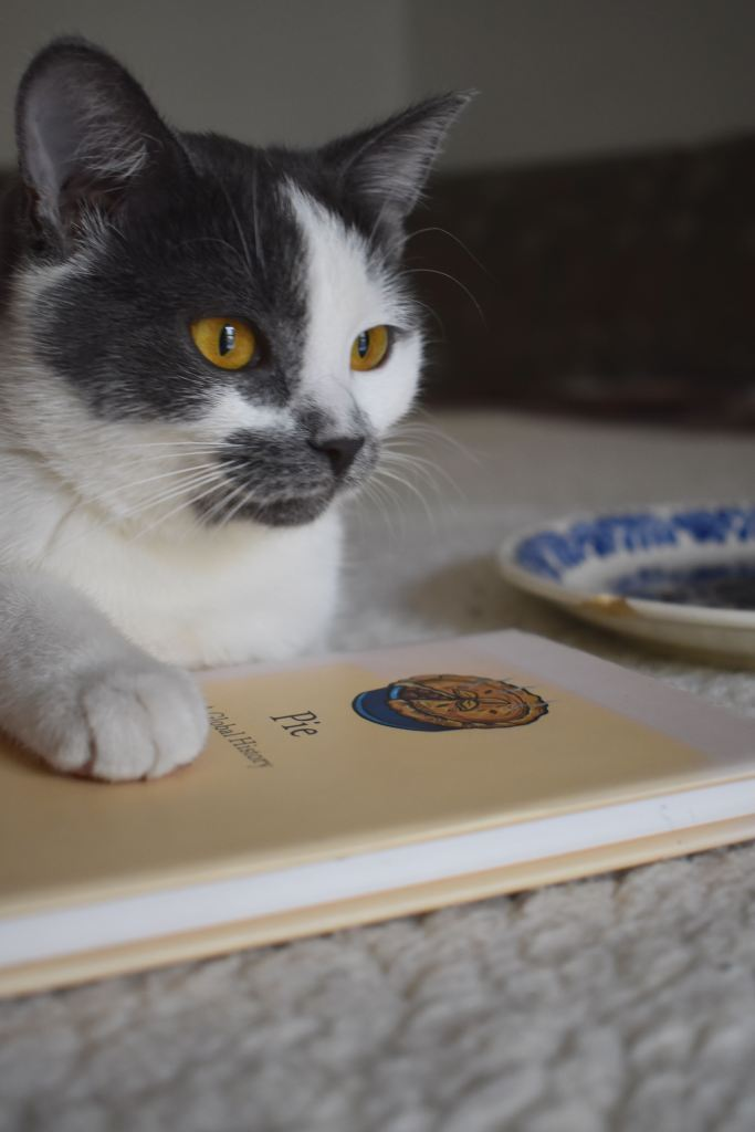 Grey and white cat with yellow eyes laying on a book