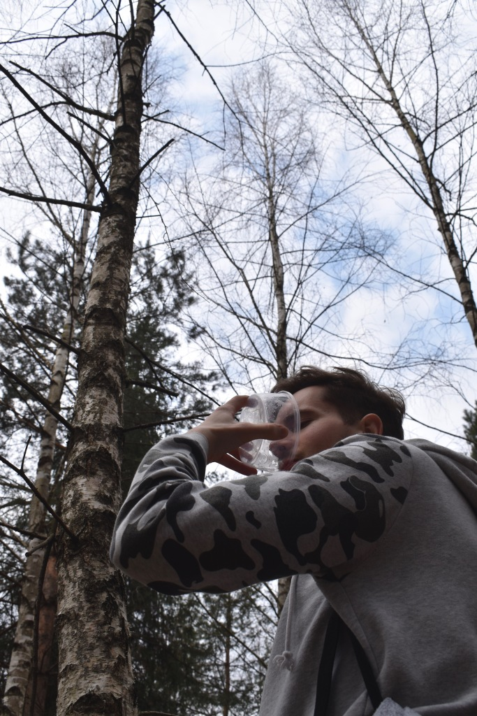 Man drinking birch tree juice in the forest